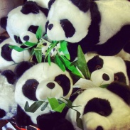 A pile of pandas in a Chinatown shop