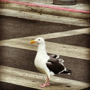 Giant seagull at Fisherman's Wharf
