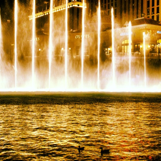 Ducks watching the fountains at the Bellagio with us.