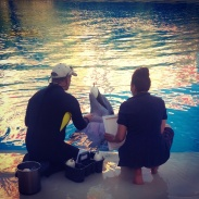 A dolphin painting during a VIP experience in the Mirage Dolphin Habitat.
