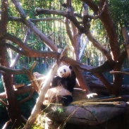 The giant pandas! I loved them so much. They just looked so happy.