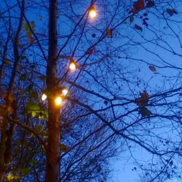 Sitting under the trees in the Stone garden as the sky darkened.