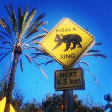 Koala crossing sign!
