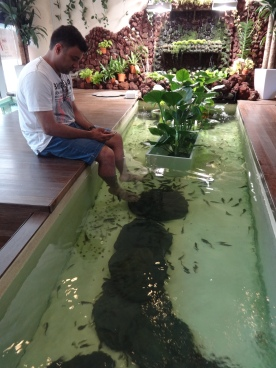 Fish pedicures in a spa at the Singapore Flyer
