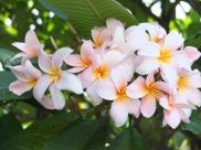 A beautiful tropical tree