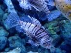 Fish at the S.E.A. Aquarium in Sentosa
