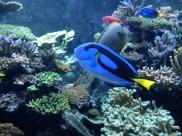 Fish at the S.E.A. Aquarium in Sentosa. Dori!