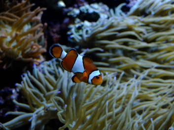 Fish at the S.E.A. Aquarium in Sentosa. Nemo!