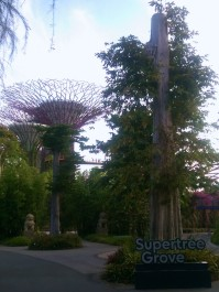 Leaving the Supertree Grove to head into the domes at Gardens by the Bay.
