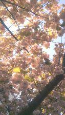 Trees in full bloom!