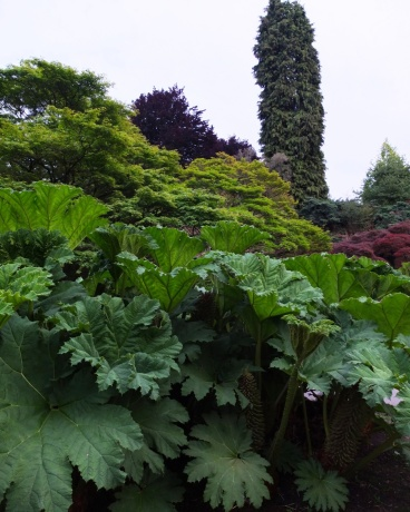 Look at those rhubarb plants. They're humongous.