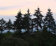 Trees at dusk.