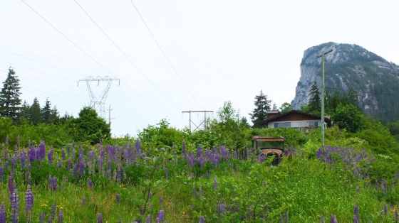 The camp/cabin spot also had cool rusty cars with overgrown wild flowers. I had to stop for photos.