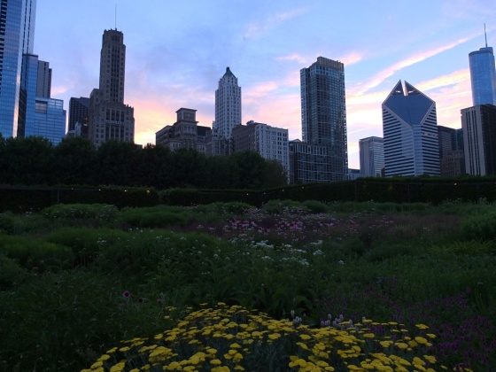 Lurie Garden at sunset