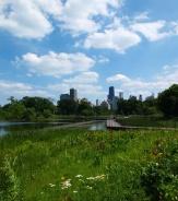 A pretty view in Lincoln Park.