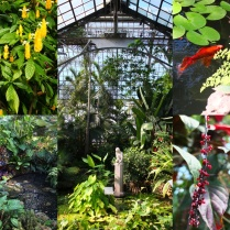 Inside the conservatory. We made it there just before closing.