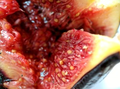 A close-up of the fig fruit